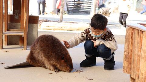 子供とビーバー動物のフリー素材 beaver Free material
