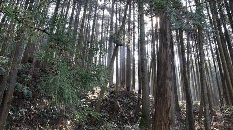 森林風景の写真フリー素材 Forest landscape photo free material