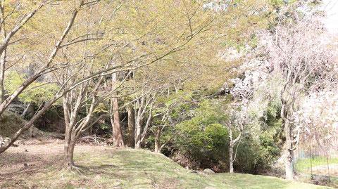 木、山、桜、森の写真フリー素材 Trees, mountains, cherry blossoms, forest photos free material