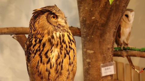 フクロウのフリー素材 Owl free material