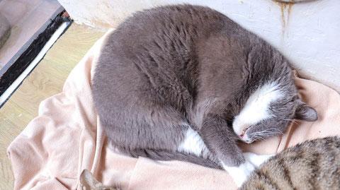 猫、ネコ、ねこ、雑種、ペット、動物の写真フリー素材 Cat, hybrid, pet, animal photo free material