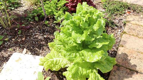 緑の野菜の写真フリー素材 Green Vegetable Photo Free Material