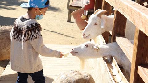 ヤギ動物のフリー素材 Goat Free material