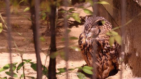 ふくろう、鳥、動物園、動物の写真フリー素材 Owls, Birds, Zoos, Animals Photos Free Material