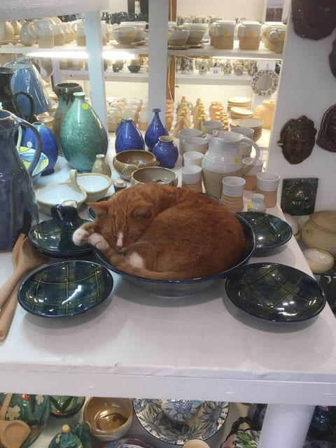 Cat in a bowl at Crail Pottery
