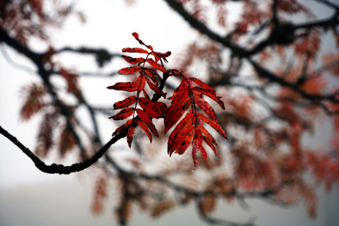 ateliereifach.ch-Kunstkarten-Poster-Fotos-Natur-«Die Farbenpracht der dritten Jahreszeit», Blätter im Herbst, Horw, Luzern, CH