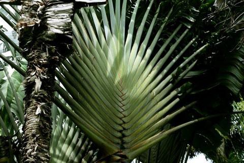 Rarotonga, Südsee