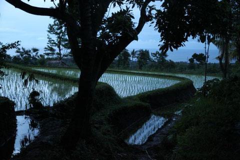 Abendspaziergang zu den Reisterrassen im Dorf