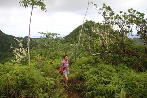 Cross-Island-Track, Rarotonga, strenousness on the green island roof