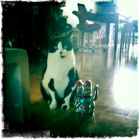 pang mau mi  (dickes Kätzchen, fat kitty)