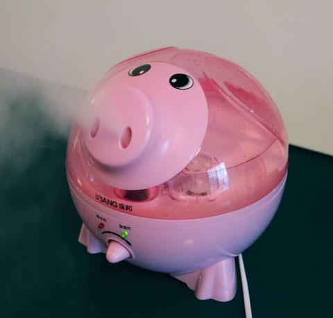 Mein Luftbefeuchtungsschwein