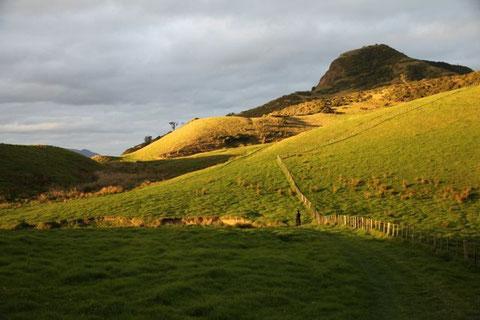 Walking through the Green Hills