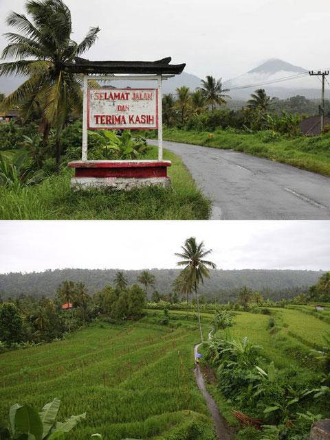 Reisfelder auf dem Weg