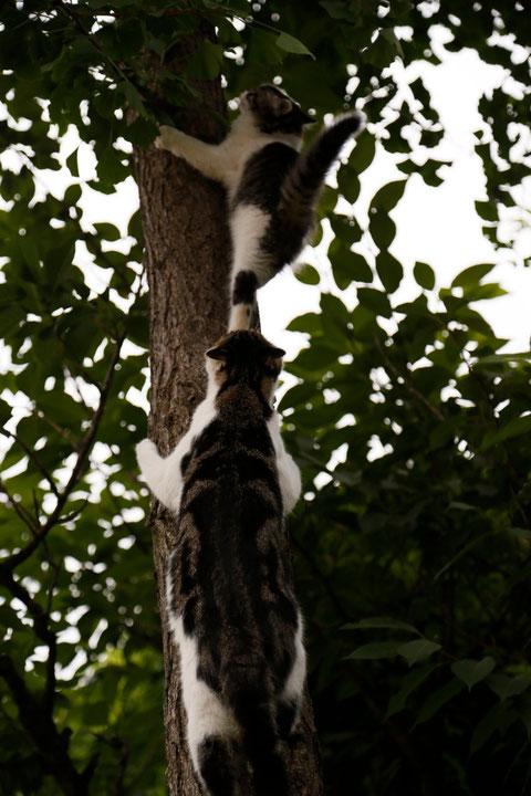 Auf Bäume kraxeln bringt ihnen der große Kater bei