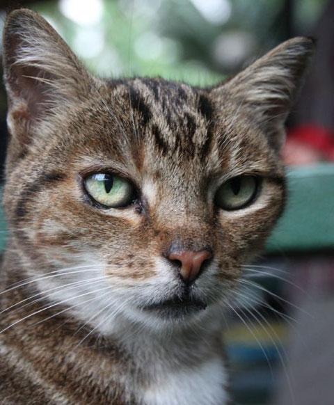 Tauonos Katze