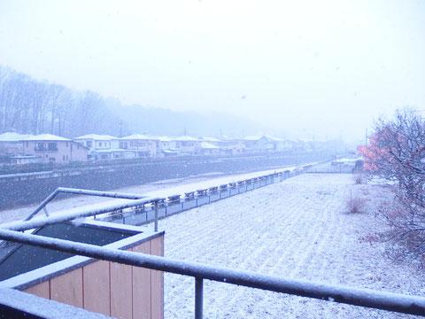 雪ですねぇ…