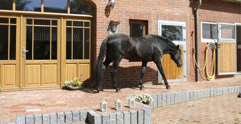 Hengst Charlie vor dem Eingangstor des Hofes Felix