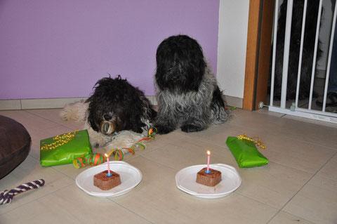 Unsere zwei Geburtstagshunde Andra und Luna <3 <3