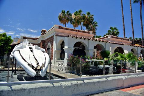 Museo de la Ballena La Paz Baja California Sur