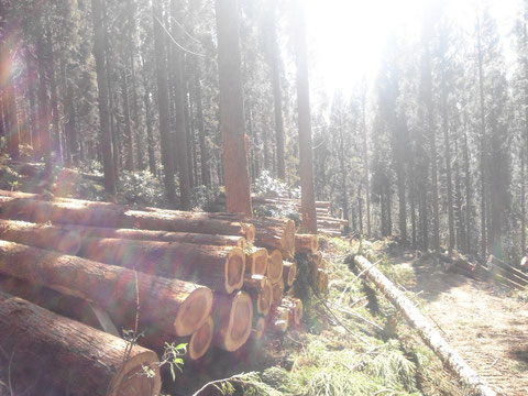 昨年の間伐現場