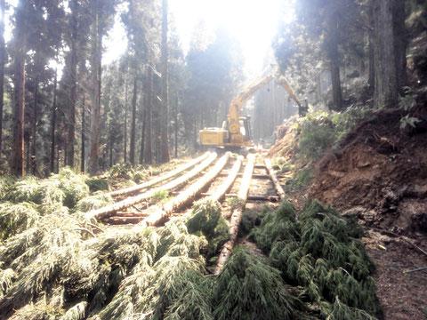 間伐搬出で手入れをしながら木材を生みます
