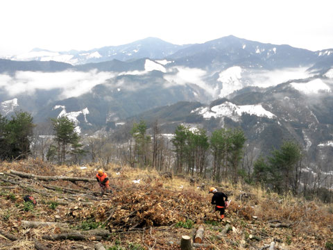 冬、極寒の中で伐採作業