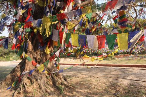 Bodhi-Baum mit Gebetsfahnen