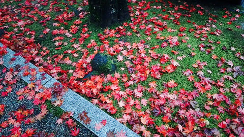 宝円寺とお庭の紅葉