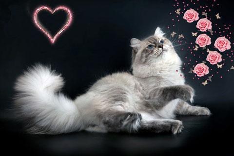 Неский маскарадный кот