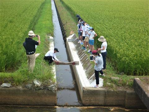 琵琶湖から水田に上がる「階段」を作る仕組みを学びます