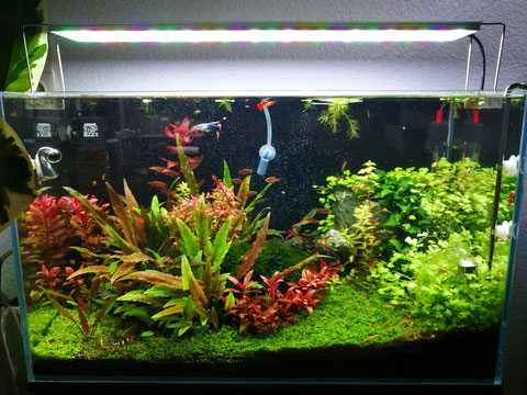 64L Aquascaping