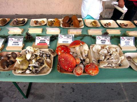 Funghi velenosi e mortali