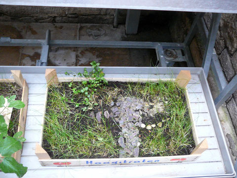 Beispielgarten 4 aus dem Gartenbaumuseum Erfurt