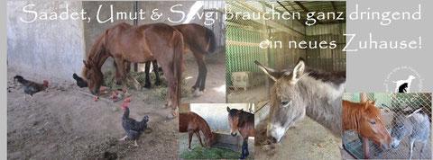 Bitte helft, dass Celals Pferde und das Eselchen in Sicherheit leben können!