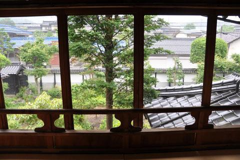 二階の窓から見えるアララギの木