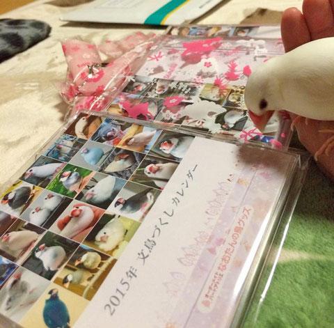 2015年 文鳥づくし卓上カレンダー 感想写真
