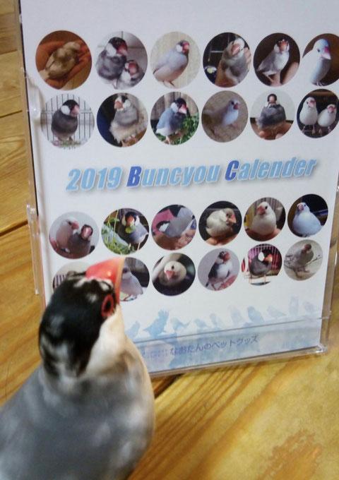 カレンダー 鳥 2019 壁紙 インコ 写真