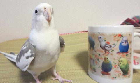 マグカップ 写真