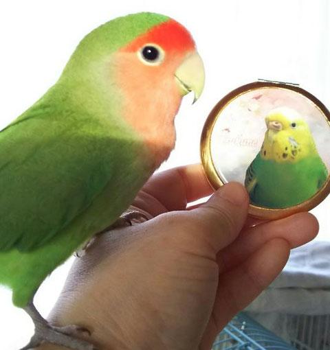 コンパクト ミラー コンパクト ミラー かわいい  コンパクト ミラー おしゃれ コンパクト 鏡 携帯 ミラー 鏡 コンパクト 可愛い コンパクト ミラー 鏡 持ち運び コンパクト ミラー コンパクト 拡大 鏡 コンパクト コンパクト ミラー 人気 可愛い 鏡