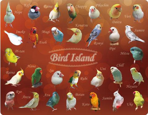 鳥ブランケットMサイズ