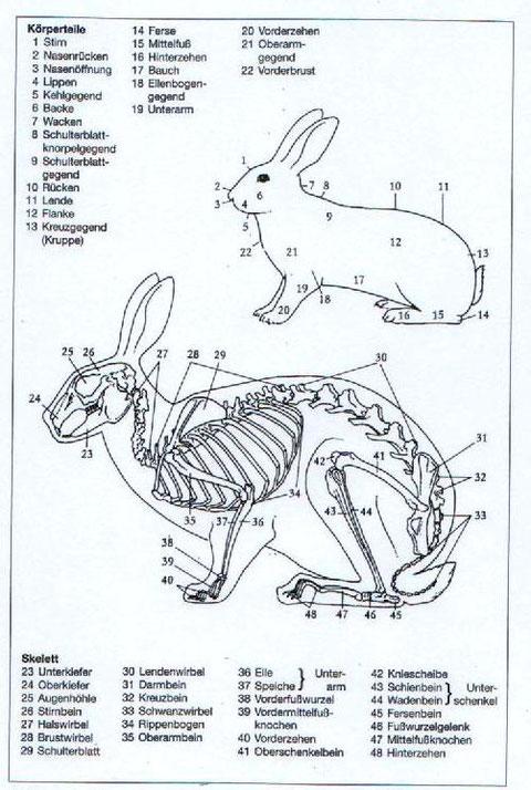 Körperteile und Skelett