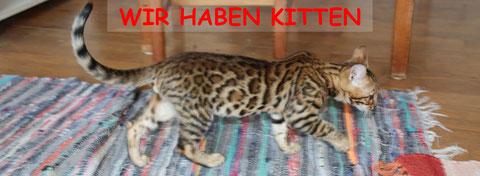 Benroma, Kitten, Erasmo