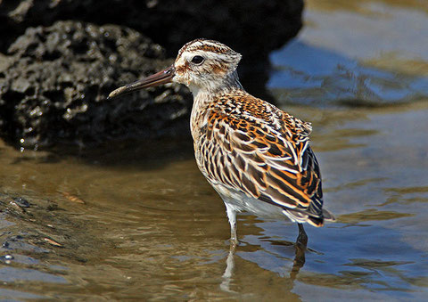 http://www.birdskorea.org