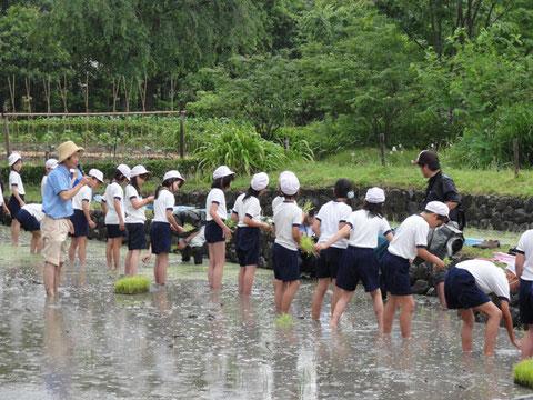 梅田スカイビルの水田にて、小学生の田植えを指導される畑先生。