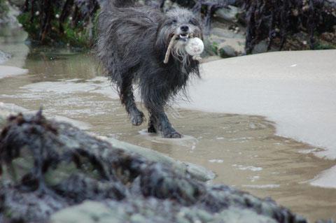 Spielen am Sandstrand findet Lady toll