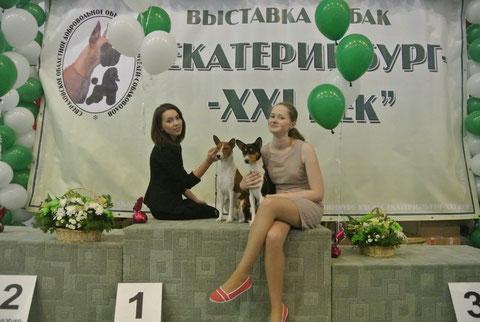 Басенджи в Новосибирске - Сайт basenji-nsk!