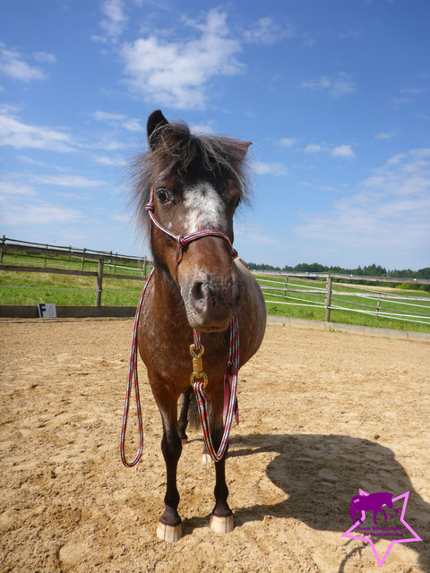 Team Shetty-Sport, Pferdeflüsterei, Knotenhalfter für Shetty