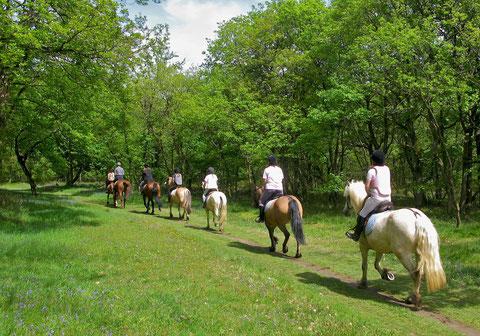 umbria franciscan pathways, franciscan path of peace assisi, horseback riding assisi, horseback riding umbria, horseback riding perugia
