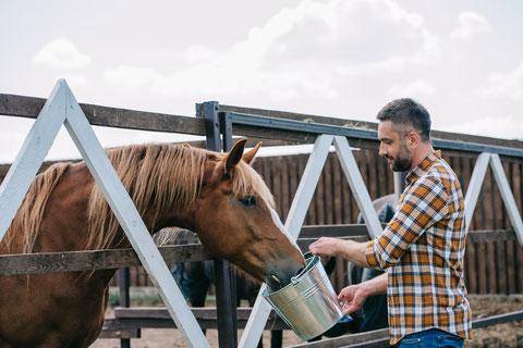 assisi horse riding experience, assisi horse riding excursion, perugia horse riding experience, perugia horse riding excursion, umbria horse riding tour, assisi horse riding tour, perugia horse riding tour
