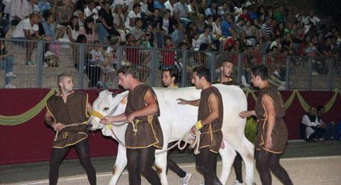la fuga del bove Montefalco